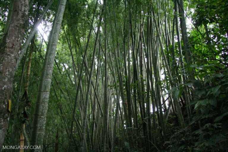 Colombia quiere plantar 180 millones de árboles: ¿Es una meta realista?