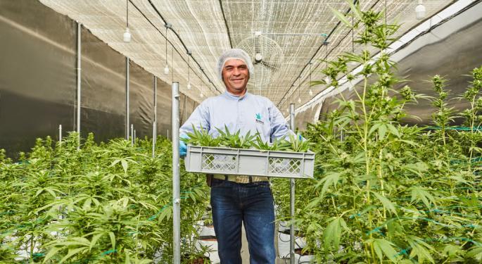 Cómo COVID-19 está afectando a las compañías de cannabis en Colombia