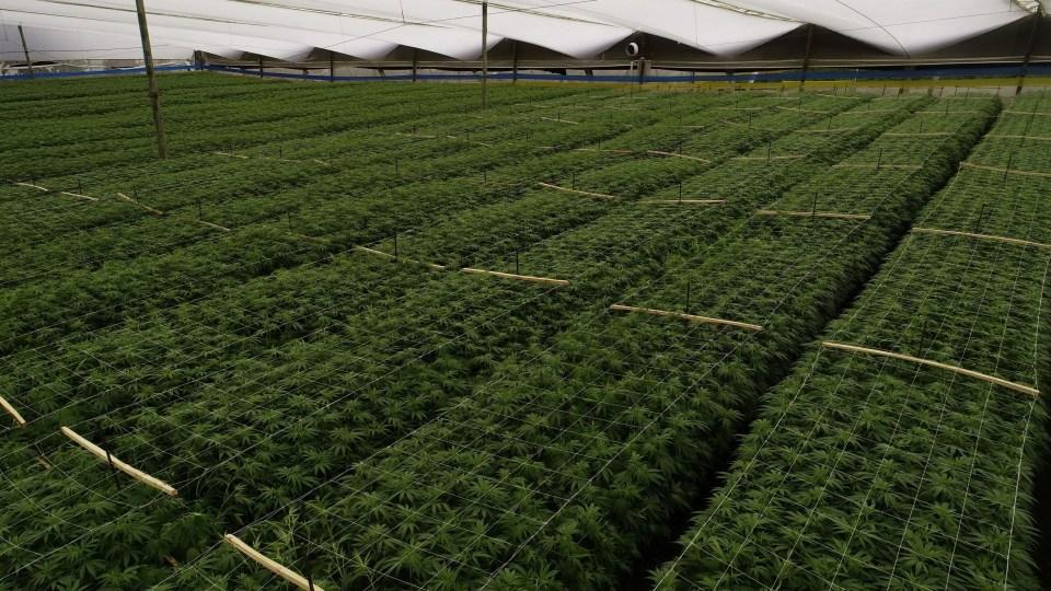 Colombia: Expectativas globales, pero no para el pequeño agricultor
